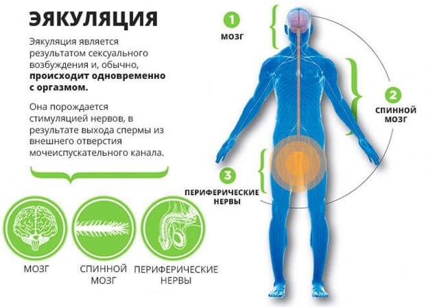 Задержка эякуляции и как ускорить эякуляцию