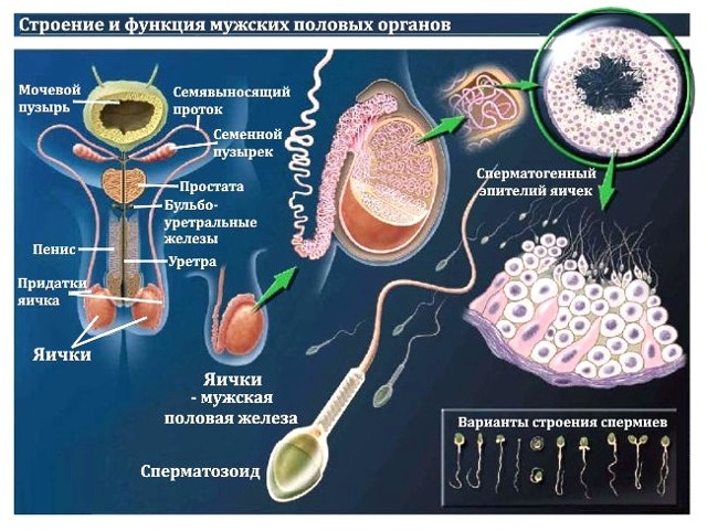 Густая сперма и очень густая сперма