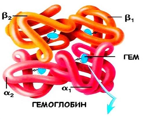 Какая норма гемоглобина в крови у мужчин