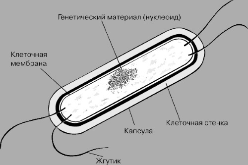 Микоплазма хоминис (mycoplasma hominis) у мужчин - что это