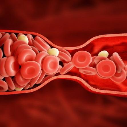 Обновление крови у мужчин и женщин
