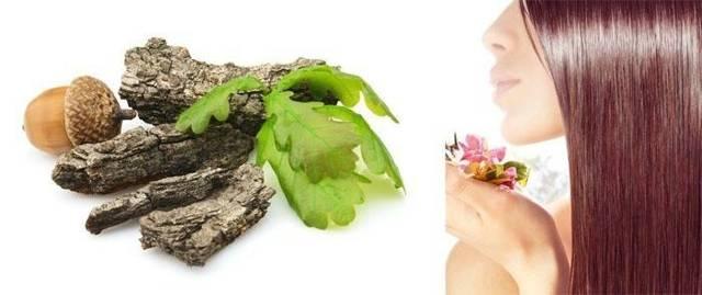 Кора дуба для волос: свойства и отзывы