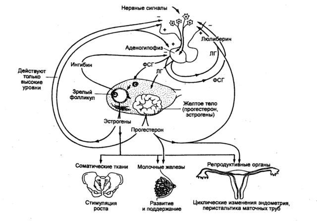 Себорея кожи головы: диагностика и лечение себорейного дерматита