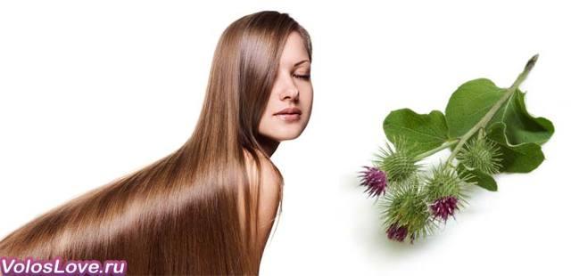 Корень лопуха для волос: применение и лечение настойкой