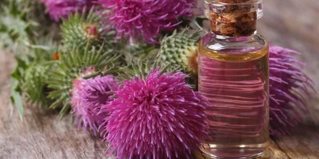Масло расторопши: применение для волос, или полезные свойства чертополоха